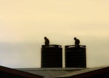 Dwa małpy są na zbiorniku wodnym Fotografia Stock