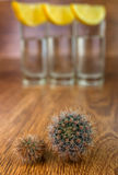 Dwa mały kaktus z tequila zdjęcia stock