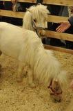 Dwa małego konia Fotografia Royalty Free