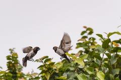 Dwa małego ptaka Zdjęcia Royalty Free