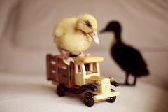Dwa małej kaczki i drewnianego zabawkarskiego samochód Obraz Stock