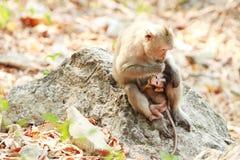 Dwa małpy siedzi na kamieniu Fotografia Stock