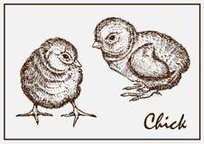 Dwa malujący kurczak Zdjęcia Stock