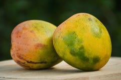 Dwa mango (biologicznego) zdjęcia royalty free