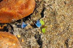 dwa motyle Zdjęcie Stock