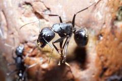 Dwa mrówek spisek fotografia royalty free