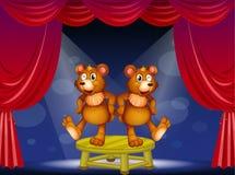 Dwa niedźwiedzia nad stołowy spełnianie przy sceną Zdjęcia Royalty Free
