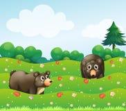 Dwa niedźwiedzia przy ogródem Zdjęcie Royalty Free