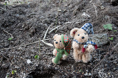 Dwa niedźwiedzia w ogródzie Zdjęcie Royalty Free