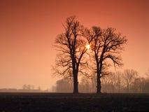 dwa oaks Obrazy Stock