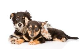 Dwa obejmuje szczeniaka psa Na białym tle Zdjęcia Royalty Free