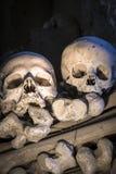 Dwa odosobnionej czaszki w Fontanelle cmentarzu Fotografia Royalty Free