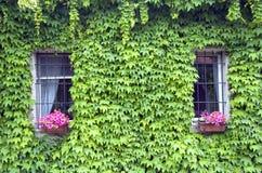 dwa okna zdjęcie royalty free