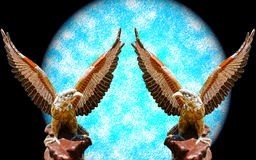 Dwa orłów otwarty skrzydło Zdjęcie Royalty Free
