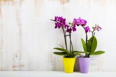 Dwa orchidei w garnkach Obraz Stock
