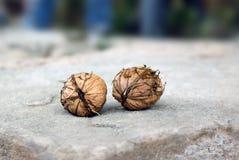 Dwa owoc orzecha włoskiego na kamieniu Zdjęcia Royalty Free