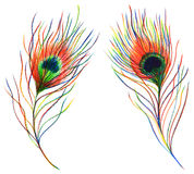 Dwa par tęczy kolorowy pawi ptasi piórko odizolowywający Obrazy Stock