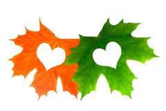 Dwa pięknego liścia klonowego z sercami Odizolowywający na białym backgr obrazy stock