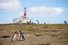 Dwa pingwinu patrzeje dla gniazdeczka Zdjęcia Royalty Free