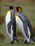 dwa pingwiny, Obraz Stock