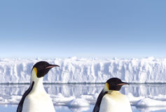 dwa pingwiny antarktyda Obrazy Stock