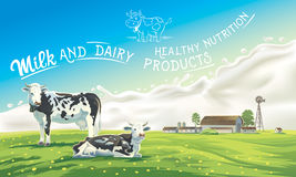 Dwa pluśnięcia od mleka i krowy Obrazy Royalty Free