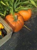 Dwa pomarańczowej bani Zdjęcie Stock
