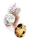 Dwa przepiórki jajka z piórkami odizolowywającymi na białym tle, macr Zdjęcia Royalty Free