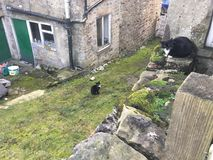 Dwa przybłąkanego kota Obrazy Royalty Free
