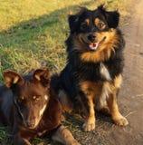 Dwa przyjaciela szczeniaka Fotografia Stock