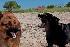 Dwa psów duża walka Fotografia Royalty Free