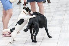 Dwa psów sztuka na ulicie Obrazy Royalty Free