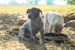 Dwa psa jedzą jedzenie i sztukę z figlarnie gestami obraz stock