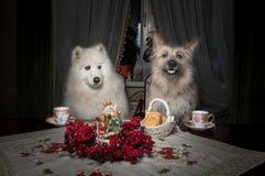 Dwa psa piją herbaty przy stołem z ciastkami, filiżankami i kwiatami, zdjęcia stock