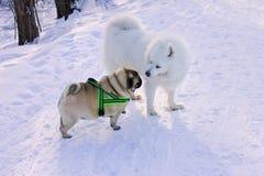 Dwa psa spotykającego dla spaceru w parku fotografia royalty free