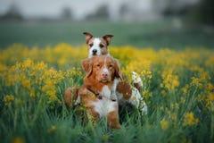 Dwa psa w kwiatu polu Obraz Stock