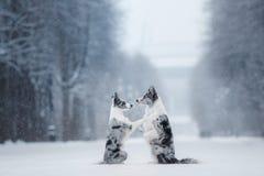 Dwa psa wpólnie, przyjaźń na naturze w zimie fotografia royalty free