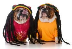 dwa psa z dreadlock fotografia royalty free