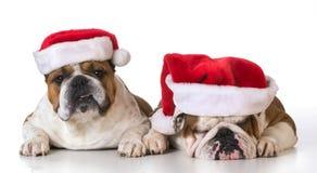 Dwa psiego Santas Obrazy Royalty Free