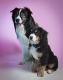 dwa psy Obrazy Stock