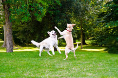dwa psy Obraz Royalty Free