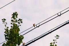 Dwa ptaka na linii energetycznej Obrazy Stock