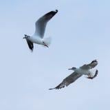 Dwa ptaka na niebieskim niebie Zdjęcia Royalty Free