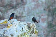 Dwa ptaka patrzeje each inny obrazy stock