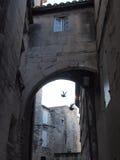 Dwa ptaka pod archway Provence Obraz Stock