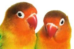 dwa ptaszki Obrazy Stock