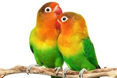dwa ptaszki Obraz Royalty Free