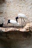 dwa ptaszki Zdjęcie Royalty Free