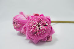 Dwa różowego lotosu fałdowego płatka na białym tle Zdjęcia Royalty Free