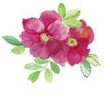 Dwa różowej róży Wzór od wzrastał Ślubni rysunki Obrazy Royalty Free
